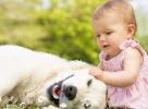 Elképesztően cuki: a kutya tanítja mászni a babát