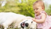 A kutya az ekcémától is megvédi a picit