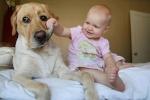 Napi cukiság: kisbabák és nagy kutyák